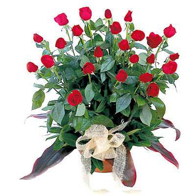 pot-rose-flower-arrangement-r11l.jpg